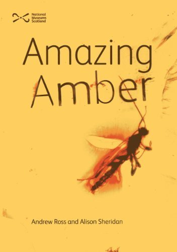 Amazing Amber by Andrew Ross (2013-09-07)