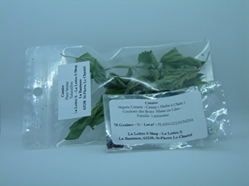 Cataire + Echantillon plant sécher - Nepeta Cataria - Catnip - ( Herbe à Chats ) - Quantité limité