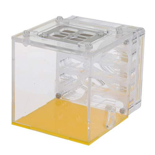 FLAMEER Boîte à Fourmis Fourmilière Plastique Educational Ant Farm Formicarium pour Ants