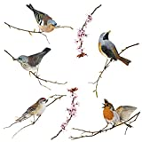 Komar - Window-Sticker BIRDS - 31 x 31 cm - F...Vergleich