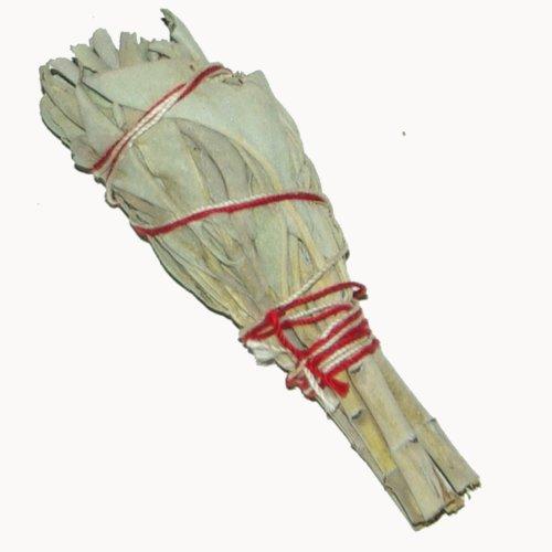2x Salbei-Stäbe 4 Inch / Bündel (je ~20gr.) von Native-Spirit.eu -- Smudge Stick Mini, ~11cm (4 Inch) white sage (1)