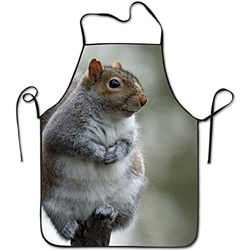 Apron Cute Squirrel Funny Cooking Apron for Men Women - BBQ Grill Kitchen Chef Barbecue Gifts, One Size Fits Most