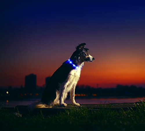 LED-Dog-Necklace-Collar-USB-Rechargeable-Loop-Available-in-6-Colours-Makes-Your-Dog-Visible-Safe-Seen