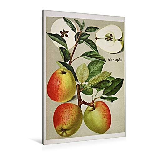 Premium Textil-Leinwand 80 cm x 120 cm hoch Alantapfel (benannt nach Heilpflanze), plattdeutsch: Jagdappel, Haferappel