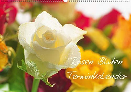 Rosen Blüten Terminkalender (Wandkalender 2020 DIN A2 quer): Ein Terminkalender in dem die Schönheit und die Vielfältigkeit der Rosen zu sehen ist (Geburtstagskalender, 14 Seiten ) (CALVENDO Natur)