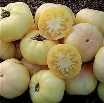 100 salubres « Indigo Rose » tomate Darkest graines bricolage jardin potager Livraison gratuite 12
