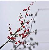 WEC Fiori decorativi artificiali Fiore finto Alta simulazione Fiore Prugna Fiore Decorazione soggiorno Pavimento Disposizione dei fiori Rami secchi Vaso Complessivo Asta di fiori floreale 125Cm Fiori