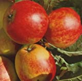 Apfelbaum James Grieve Apfel James Grieve - Malus James Grieve Containerware / 120-160 cm hoch Apfelbaum kaufen