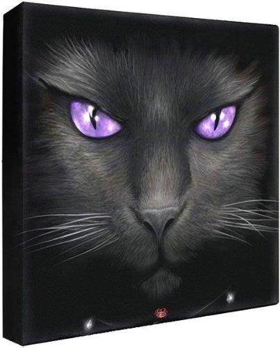 Spiral Black Cat Bild