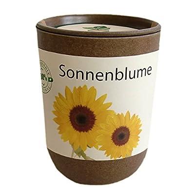 ecocan - Sonnenblume in der Dose von Ecocube auf Du und dein Garten