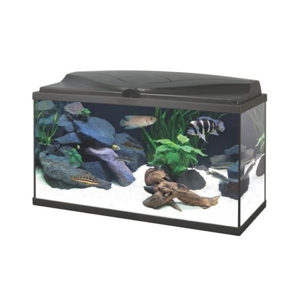 Ciano BLACK Aqua 80 LED Tropical Glass Aquarium – Includes Filter, Lights & Heater 71L