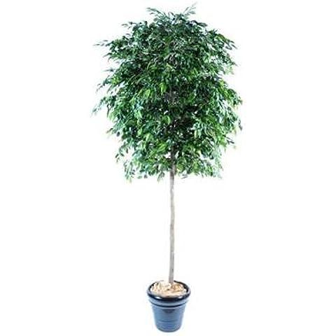 GD Bo balcons–árbol artificial Ficus Natasja–270cm