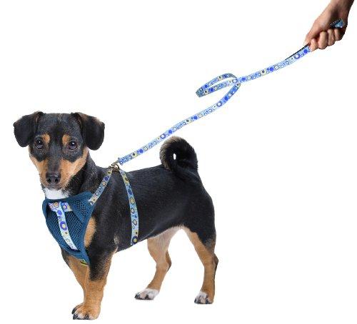 hundeinfo24.de Vanity C5080066 Gepolstertes Hundegeschirr, für kleine hunde, hellblau