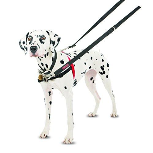 Halti Hundegeschirr, Größe M - 5