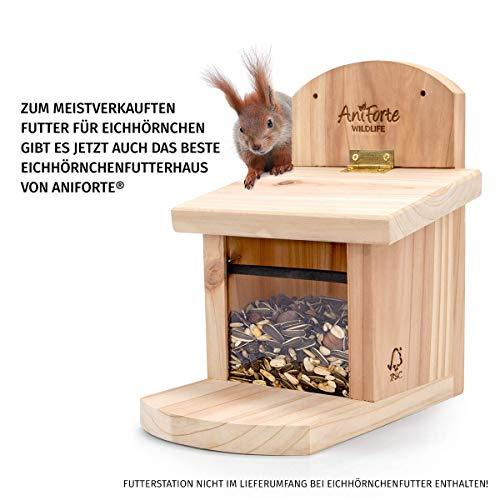 AniForte Wildlife Premium Eichhörnchenfutter 1 kg für Eichhörnchen und Streifenhörnchen – Naturprodukt Mischung, Besondere und artgerechte Eichhörnchen Fütterung – Unsere Spezial Futtermischung - 4