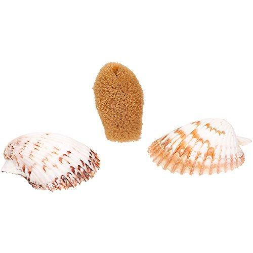 petco-hermit-crab-sponge-shell-dishes-shells-and-1-sponge-by-petco