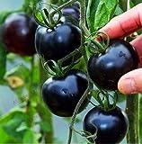Bloom Green Co. Â¡El Precio Mã¡s bajo!Leche, Tomate Rojo, Bonsai, Cereza, Tomate, Flores, Frutas y Vegetales, Plantas de Nuestra Planta para el huerto Familiar 100: 3.