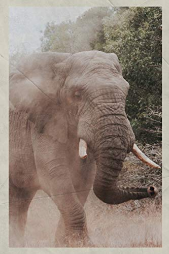 2020: Bull Elephant Handy Planner Calendar Organizer Daily Weekly Monthly Vintage Retro Poster style for best african safari for seniors -