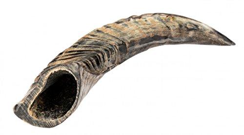 NaDeco Schafhorn poliert 10-14cm | Schafshorn | Widder Horn | Schafthörner | Tierhörner - 12 Gezüchtet