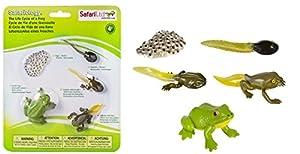 Safari Ltd. 269129 Ciclo de Vida de una Rana