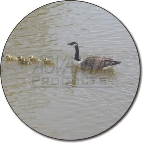 in-kanada-ganse-und-goslings-kuhlschrank-magnet-weihnachtsgeschenk-ref-ab-g3fm