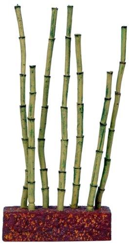 Bambus Fur Aquarium Was Einkaufen De