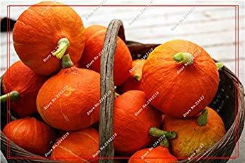 Graines de citrouille Cucurbita fil d'or fruits citrouille melon et légumes des semences meilleures ventes de l'extérieur, Bonsai 30 Plantes en pot Pcs 12
