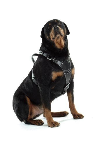 hundeinfo24.de Bobby Rock Attitude Hundegeschirr aus schwarzem Leder, 85?105cm