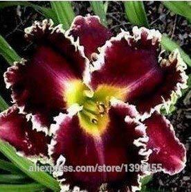 Homely 110 pièces de graines de sia 24 sortes de belles fleurs rares
