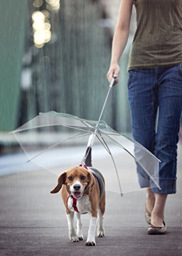 RakMark Correa para perros con paraguas incorporado accesorios mascota