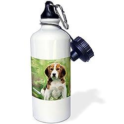 3dRose wb_4020_1 Beagle Puppy Sports Water Bottle, 21 oz, White