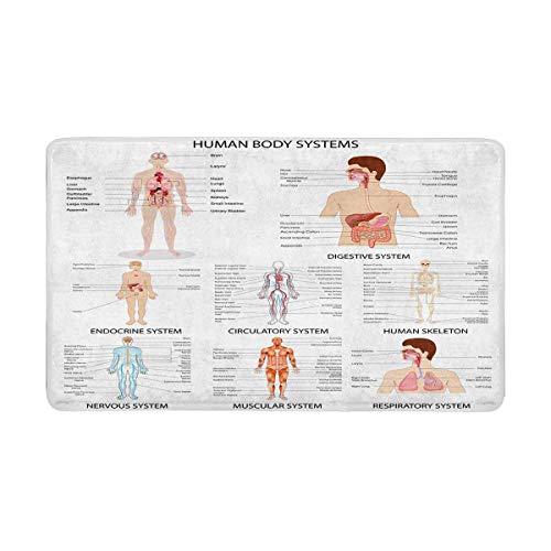 Indoor Komplett System (LIS HOME Komplette Chartdifferent Human Organ System Indoor Fußmatte Latexrücken rutschfeste Fußmatte Eingangsteppich)