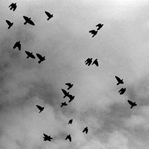 birds-pure-happiness