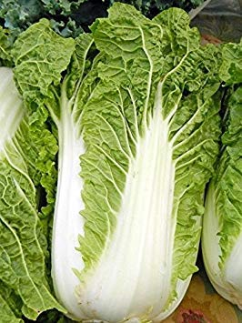 Farmerly 200 Seeds of Michihili Chinese Cabbage Pak Choi Bok Heirloom Greens Healthy Non - GMO