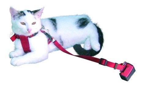 De Nylon. TambiÃn se puede usar como arnÃs para pasear al perro. Muy acolchado y con tiras totalmente ajustables en barriga y pecho. Rápido y fácil de poner. Con correa corta totalmente ajustable (no apto para todo tipo de coches, hebillas diferent...