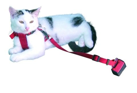 Trixie Imbracatura e Cintura di Sicurezza per Gatti, 20-50cm, Rosso