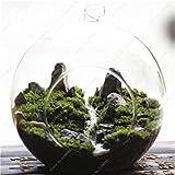 Green Moss Seeds 120 Stück seltene exotische Bonsai Moss Samen Schöne Moss Kugel Dekorative Garten Kreative Gras Samen Topfpflanze 19