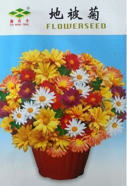 be-daisy-seeds-one-thousand-ju-seeds-bonsai-flowers-flower-40-pcs-bag-original-packaging-seeds-for-h
