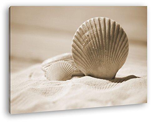 deyoli Klassische Muscheln im Sand Format: 80x60 Effekt: Sepia als Leinwandbild, Motiv fertig gerahmt auf Echtholzrahmen, Hochwertiger Digitaldruck mit Rahmen, Kein Poster oder Plakat - Das Leben Auf Dem Land 100% Grünen