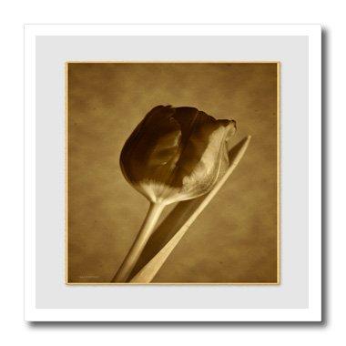 3drose HT _ 15435_ 1Vintage Tulip solitary-iron auf Wärmeübertragung für weiß Material, 820,3cm