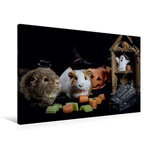 and 90 cm x 60 cm quer, Schweinoween | Wandbild, Bild auf Keilrahmen, Fertigbild auf echter Leinwand, Leinwanddruck: Halloween mit Meerschweinchen (CALVENDO Tiere) (Guinea Pig Halloween)