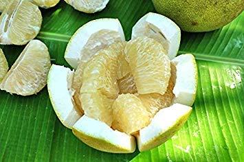 Potseed Keimfutter: 50 Seed Pomelo Citrus Maxima Neue frische Süße weiße Frucht Exo Frisch tragfähige 2 C234