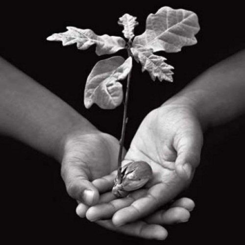 1art1 44779 Pflanzen - Opfergabe, Eichenbaum - De Bourgies Poster Kunstdruck 30 x 30 cm
