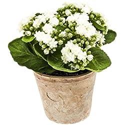 artplants Künstliche Kalanchoe FAJRA mit Blüten, Creme-weiß, 22 cm - Deko Blume/Kunst Pflanze