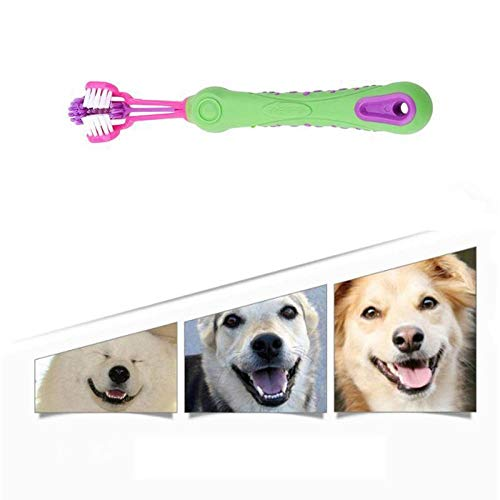 FJTHY Pet Zahnbürste Multi-Winkel-Reinigungs-Medium Großen Hund Geschenk-Set Von 4 Praktischen,Grün,Einheitsgröße