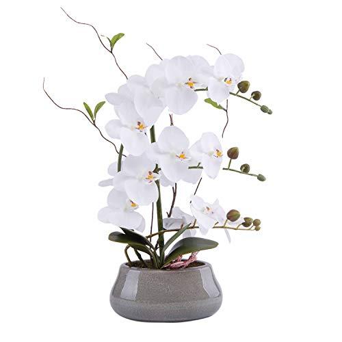 Arrangement weiß Large Size White ()