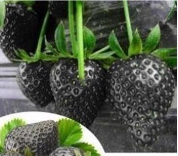 100pcs / sac 24 sortes de fraises Collection graines de fraises de fruits géant bonsaï pot non-OGM bio pour plantes de jardin à la maison 18