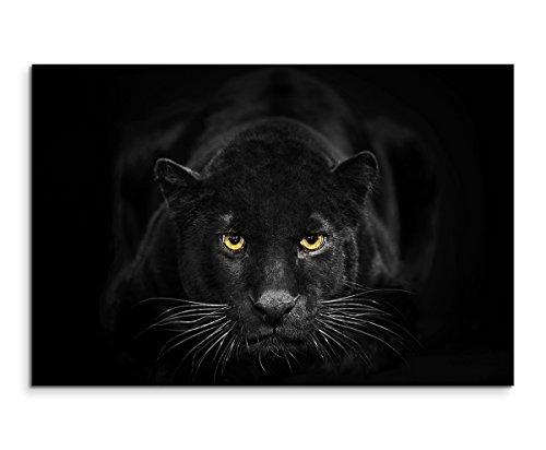 Sinus Art Wandbild 120x80cm Tierfotografie - Schwarzer Leopard mit bernsteinfarbenen Augen Nicht GEFUNDEN