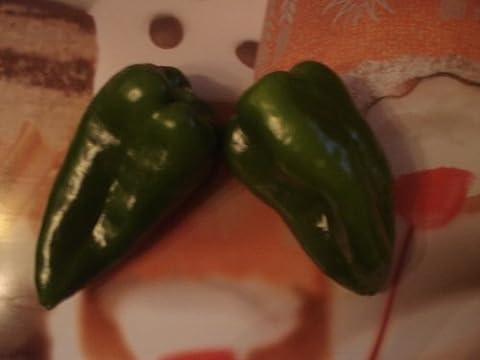 Ancho/Poblano 10 Samen (Mexikanische Chili) (Poblano Chiles)