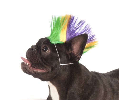 ny Mardi Gras Pet Mohawk Wig, Small/Medium by Rubie's Costume Co (Mardi Gras Farbe)